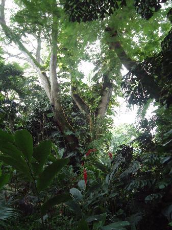 Bahia del Sol Beach Front Hotel & Suites: Sus preciosos jardines