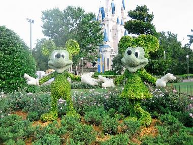 Mickey and Minnie topiary