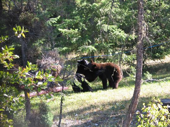 Chalet in the Rockies B&B: Bears in the backyard