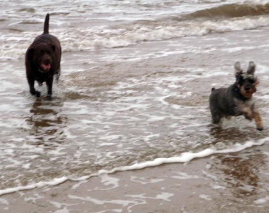 The Old Stables: Eddie and Daisy playing in the sea.