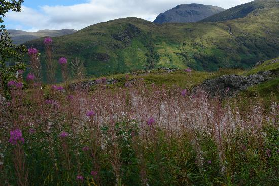 Highland Experience Tours: Heather in bloom