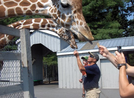 Adirondack Animal Land: Happy Giraffes!