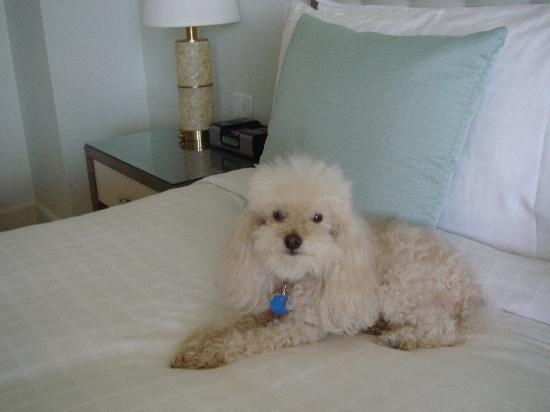 Four Seasons Resort, Palm Beach : I was a welcomed guest!