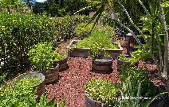 Fresh Herb Garden on the Grounds of Polo Beach Club