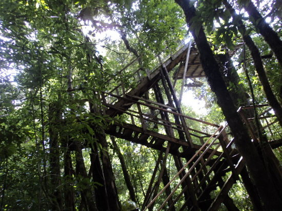 Canopy Adventure Barva Volcano: stairs to the first platform