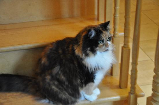 Blue Forest Lane Bed and Breakfast: Peaches the Cat