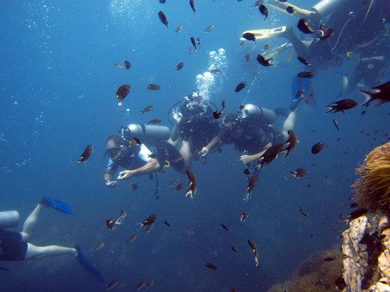 Bophut Diving Tours: Shark island