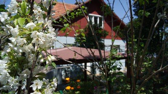 Buyukada Ece Pansiyon: getlstd_property_photo