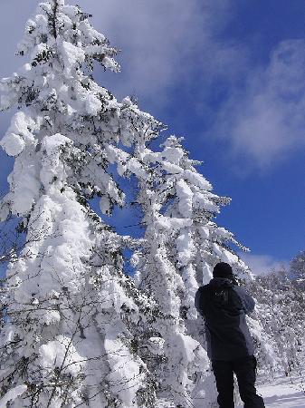 Niseko natureguide Forestrek - Day Tours: 冬のツアー