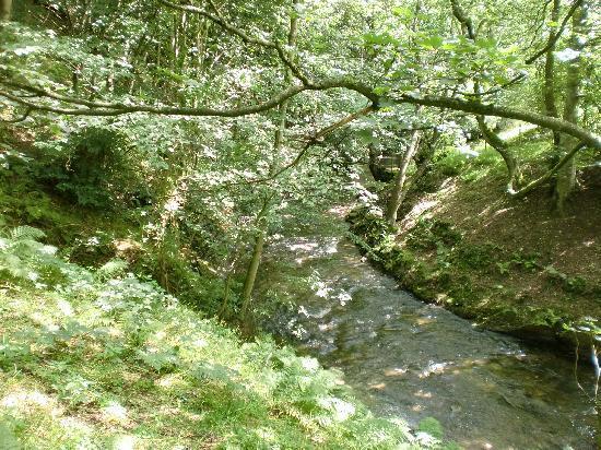Spring House Farm: stream