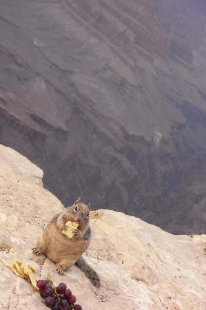 Grand Adventures: The Squirrel