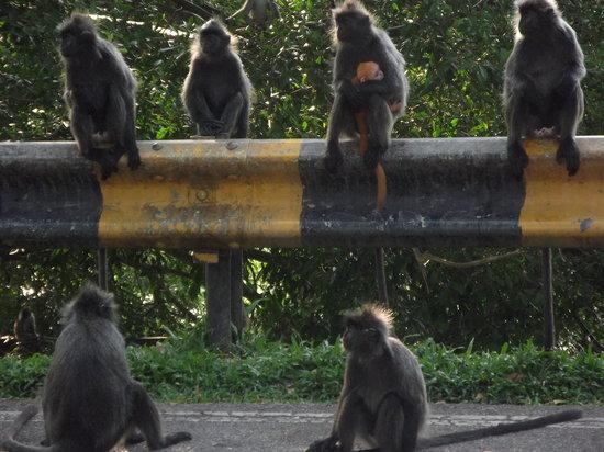 Kuala Selangor Nature Park (Taman Alam Kuala Selangor): MOTHER & CHILD WITH THEIR CONTRASTING FUR