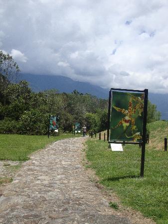 Exposicion fotografica de orquideas de Merida Jardin Botanico de Merida