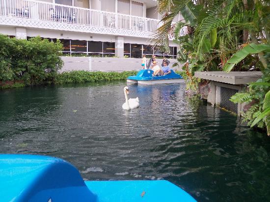 Tradewinds Island Grand Resort