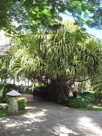 Natura Park Beach - EcoResort & Spa: giardino interno