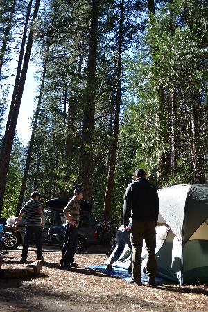 North Pines Campground: Tree coverage