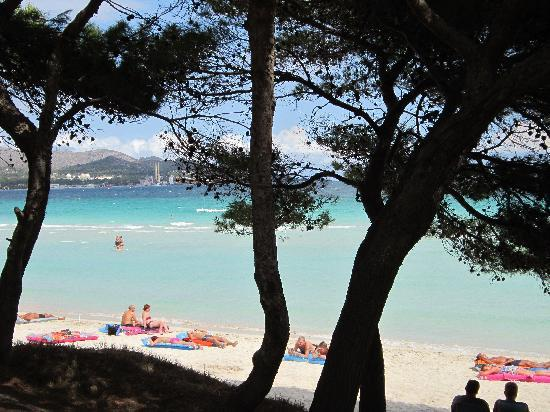 Platja d'Or: fantastic beach