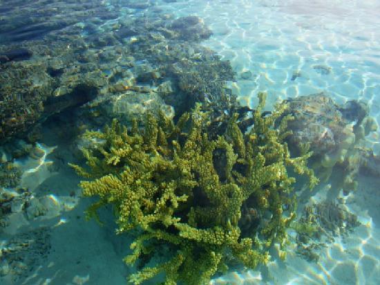 The Reef Dive Resort: Foto fotografiado desde fuera del agua¡¡¡¡