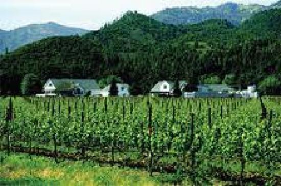 Calwineries : Vineyards