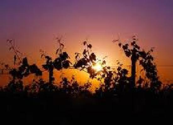 Calwineries : Sunset over the cellars