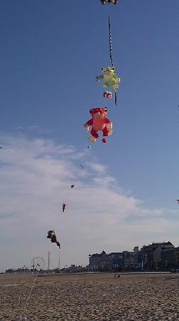 Beach Walk Hotel: Kites on beach-just steps from BW Hotel