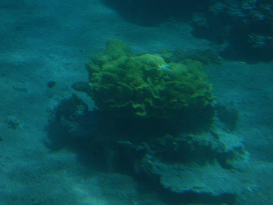 Neptune Boat: Incrivel fundo do mar