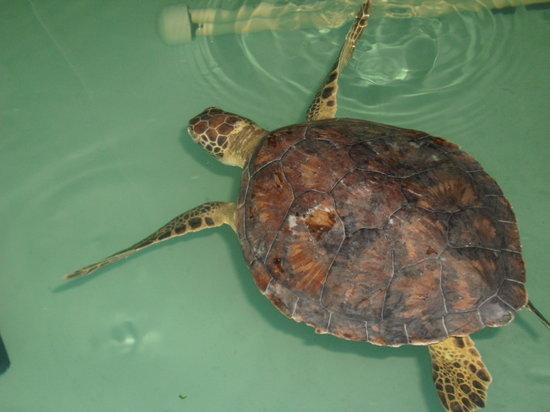 Sea Turtle, Inc.: Sea Turtle, Inc  8 2011