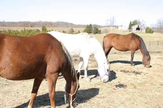The Country Lodge at Sabbath Song Farm: Their horses and dogs let you know it is in the Country!