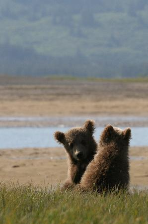 Alaska Bear Adventures - Day Tours: 2009