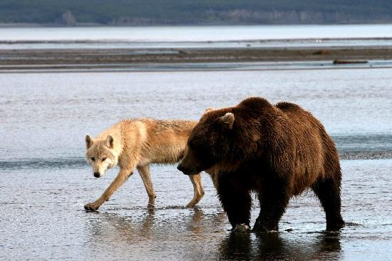 Alaska Bear Adventures: friends, for now