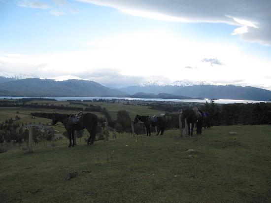 Westray Adventures - Horse Treks & Quad Tours: Top of farm