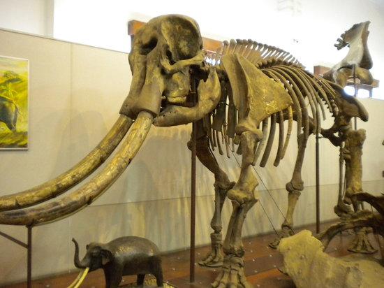 متحف الجيولوجيا
