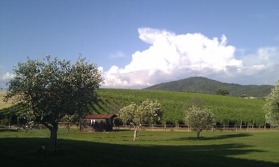 Agriturismo Il Casale degli Olivi: Aussicht