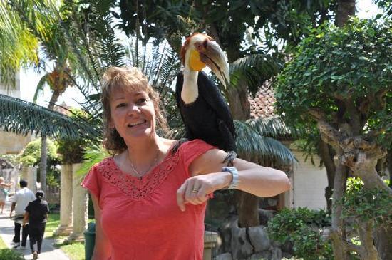 Melka Excelsior Resort Hotel: Hornbill