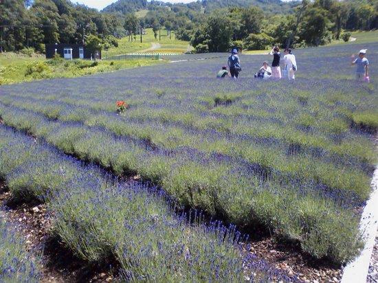 Numata, Japan: 7月後半からが見ごろです
