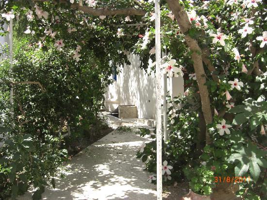 Hotel Minoa: The garden