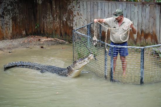 Hartley's Crocodile Adventures: Croc Attck Show