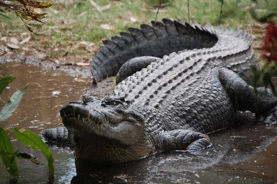 Hartley's Crocodile Adventures: Big Croc