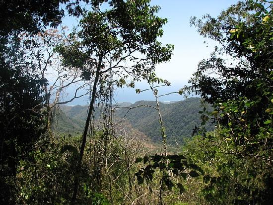Cerro Hoya National Park: View of ocean from mountain in Cerro Hoya