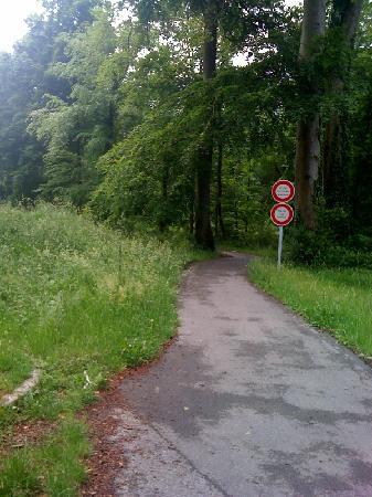 Forêt de Compiègne : Piste vers Saint Sauveur.