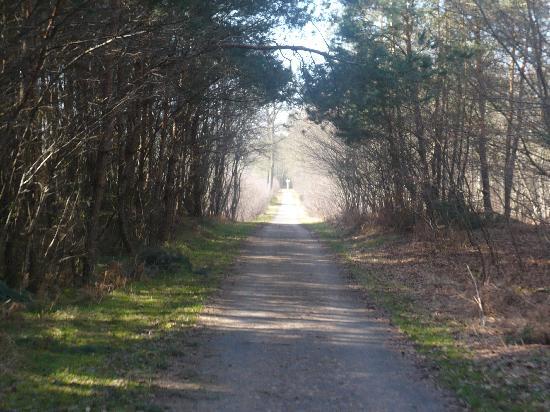 Forêt de Compiègne : piste.