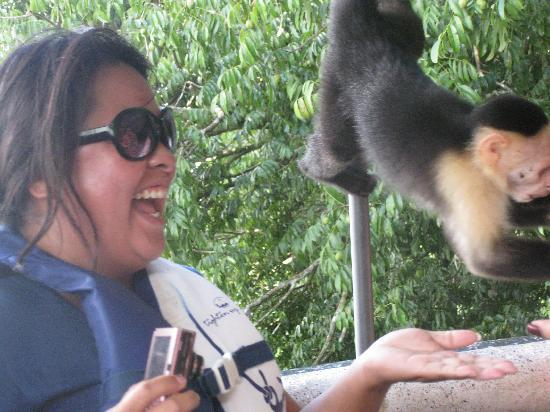 Panama Canal Boat Eco Tour : My friend laughs as a monkey boards our boat