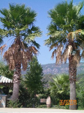 Dalyan Resort: beautiful
