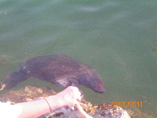 Dalyan Resort: turtle watching
