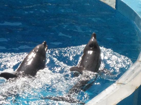 Alfagar II Aparthotel: Zoomarine dolphin show