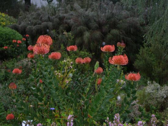 Kirstenbosch National Botanical Garden: 花