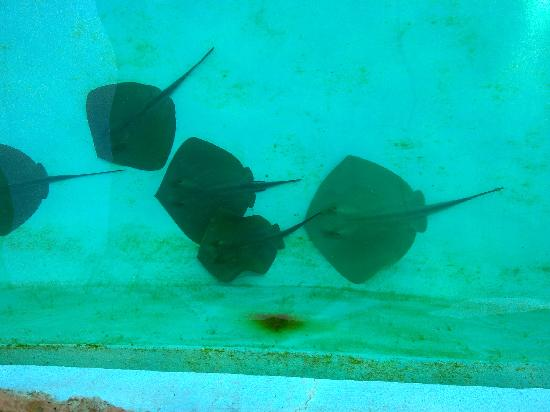 Sealanya : Swimming with rays