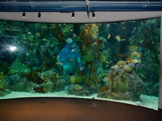 ... shark tank - Foto di ABQ BioPark Aquarium, Albuquerque - TripAdvisor