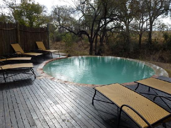 Hoyo-Hoyo Safari Lodge: La piscine