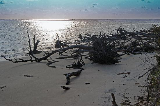 Big Talbot Island State Park: The beach
